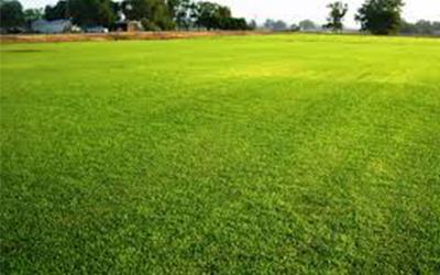 Real Grass Or Fake